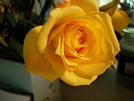 A Perfect Yellow Rose by Bonita Waitl