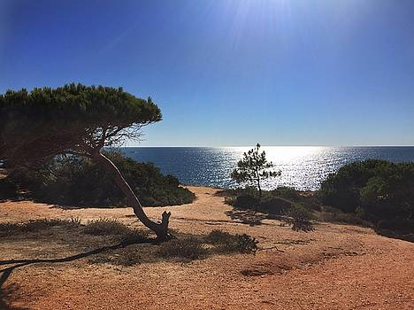A pine tree in front ot the Atlantic Ocean by Dirk Jung