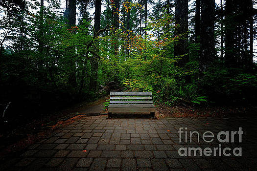 A Place to Sit and Ponder by Steve Triplett