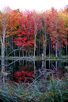 Michelle  BarlondSmith - A Pond of Reflection - The Autumn Series