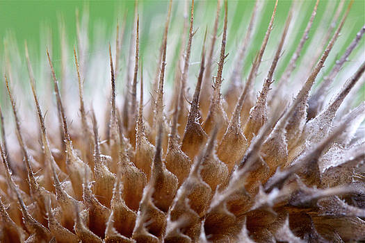 Mother Nature - A Prickly Situation