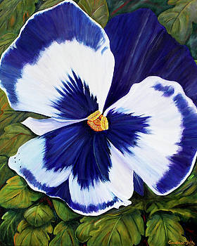 A Purple Pansy by Andrea Folts