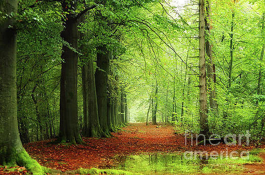 A rainy day in the forest by LHJB Photography