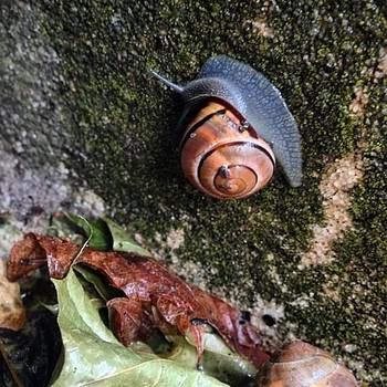 A Rainy-day #snail. #nofilter by Ben Berry