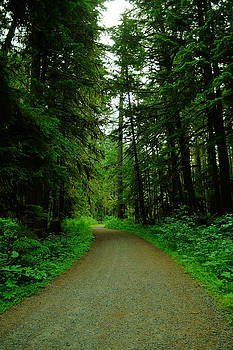 A road through the forest by Jeff Swan