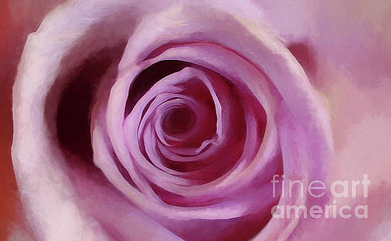 A Rose Abstract by Darren Fisher