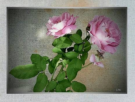 A Rose Arose by Lawrence P Kaster