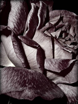 Emily Kelley - A Rose By Any Other Name ...