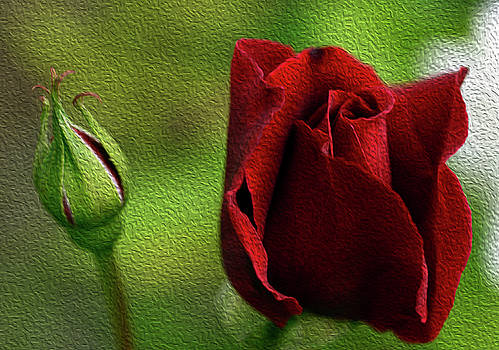 A Rose for Mother by Wanda Brandon