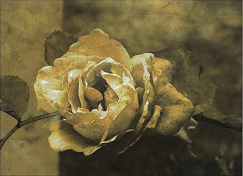 Vintage Effect Rose by Andrew David Photography