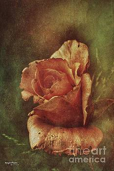 A Rose From Long Ago by MaryLee Parker