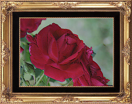A Rose is a Rose framed by Cathy Harper
