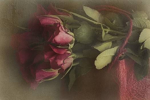A rose is a rose is a rose  by Dania Reichmuth