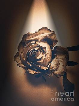 Onedayoneimage Photography - A Rose is Born