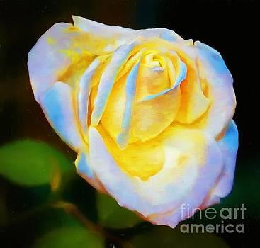 A Rose by John Kolenberg