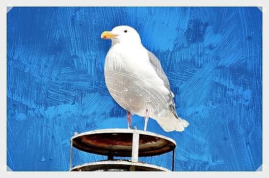 Debra  Miller - A Seagull Pauses