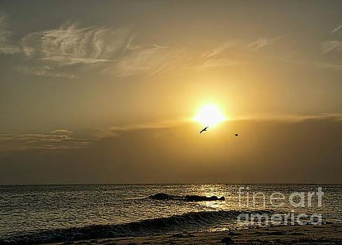 A Seagull Sunset by Diane LaPreta