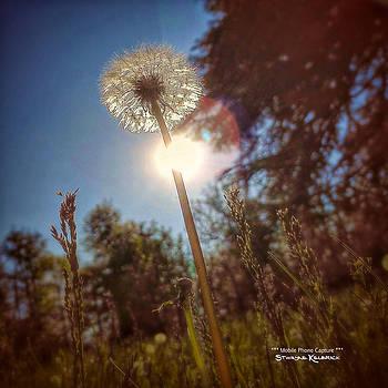 A shiny flower day by Stwayne Keubrick