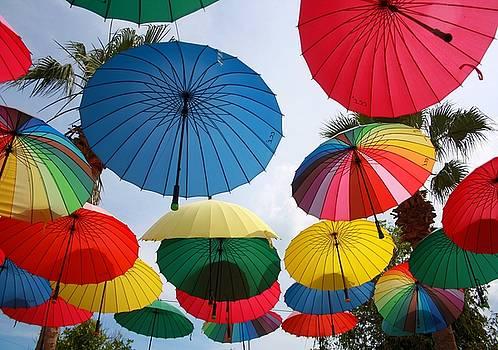 Tracey Harrington-Simpson - A Shower of Rainbow Coloured Umbrellas