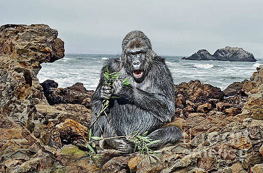 A Silverback Gorilla Down By the Shore  by Jim Fitzpatrick