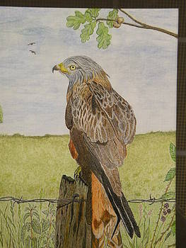 A simple Red Kite by Alan Webb