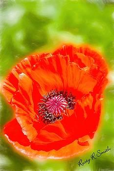 A single bright red poppy blossom by Rusty R Smith