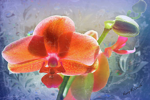 A single closeup orchid blossom. by Rusty R Smith