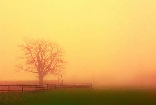 A Slow Fog by Daniel Berman