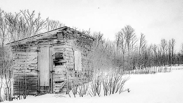 A snowbird returns by Kendall McKernon