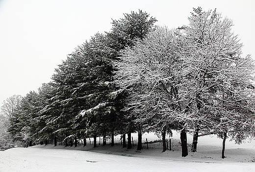 Allen Nice-Webb - A Snowy Day