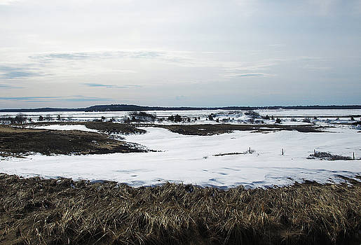 A Snowy Marsh by Mary Capriole