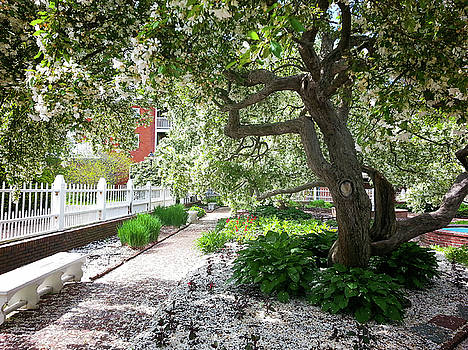 A springtime carpet of white petals from a tree by Natalie Rotman Cote
