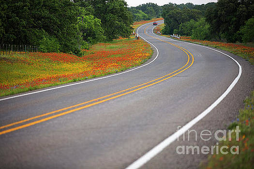 Herronstock Prints - A state highway directs this stunning field color explosion of y
