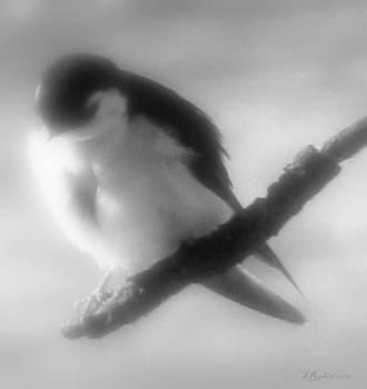 Sandy Rubini - A Swallow