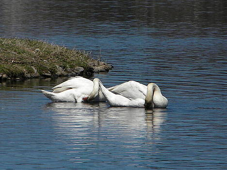 A Swans Bow by Melissa Mendelson