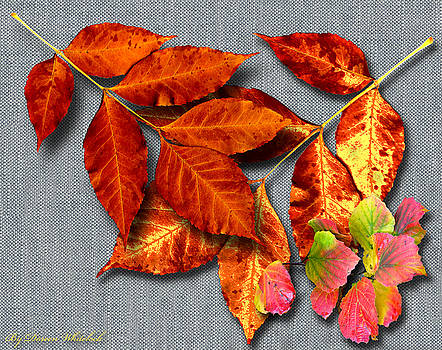 A Taste of Fall II by Doreen Whitelock