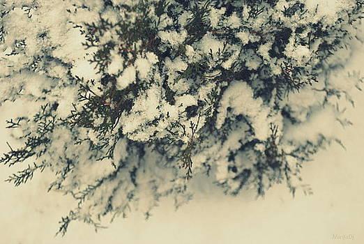 A thing of wonder by Marija Djedovic
