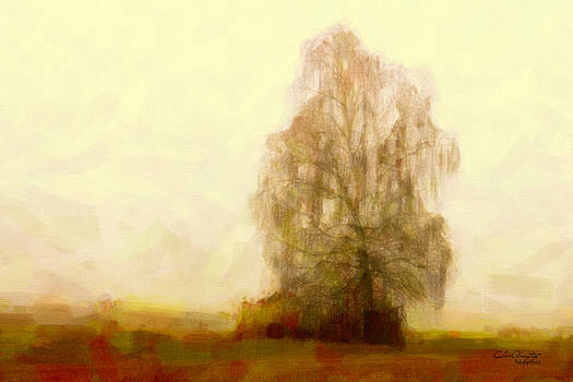 A Tree by Chris Armytage