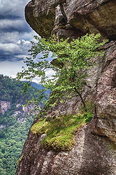 A Tree Grows in Chimney Rock by John Haldane