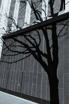 A Tree Grows In New Orleans by Kelly McNamara