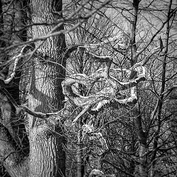 A tree in Black and White by Laura Denis