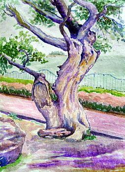 A tree near upper lake. by Prabhu  Dhok