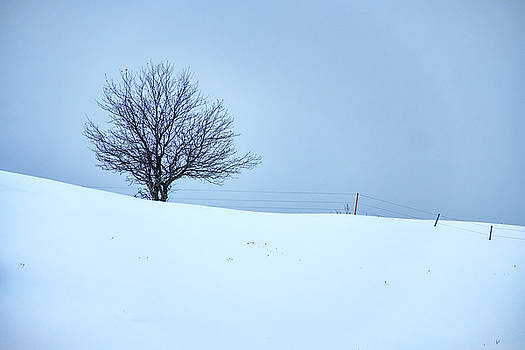 A Tree on the Ridge by Rick Berk