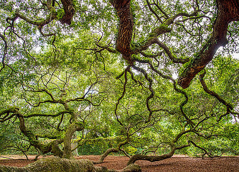 A Trees Point of View by Christopher L Nelson