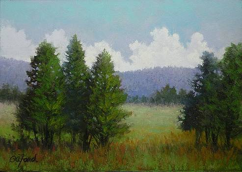 A Tree's View by Paula Ann Ford