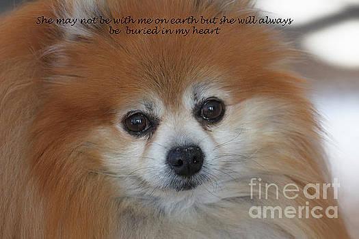 A tribute to Foxy Lady my pet Pomeranian  by TN Fairey