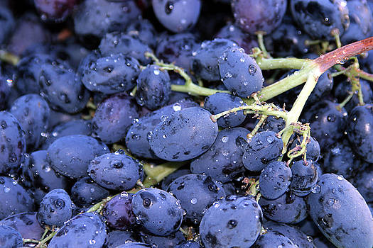 Michael Ledray - A trip through the farmers market featuring Purple Grapes.