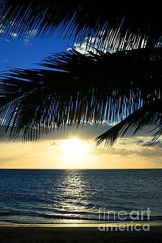 A Tropical Sensation by Sharon Mau