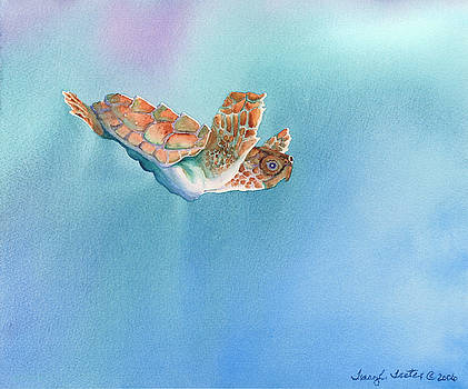 A Turtles Flight by Tracy L Teeter