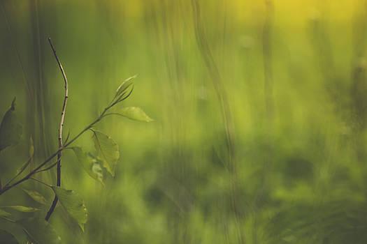 A Veil of Green by Joni Eskridge